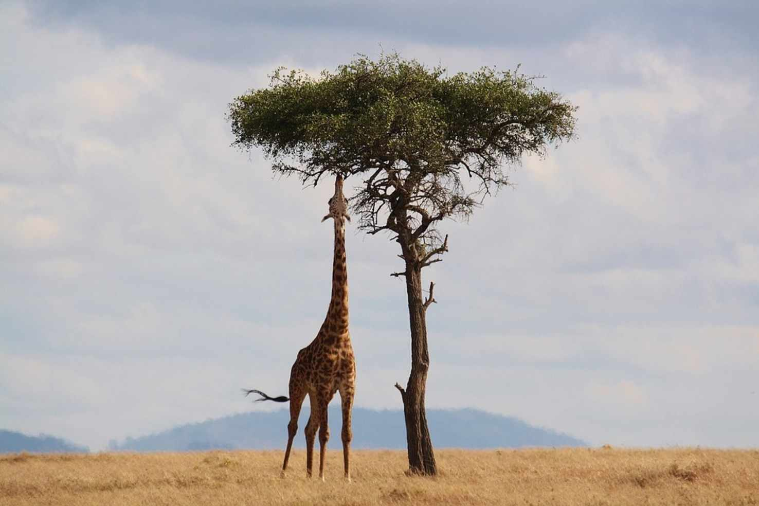 Kenyan Safari   Kenya Tour Package