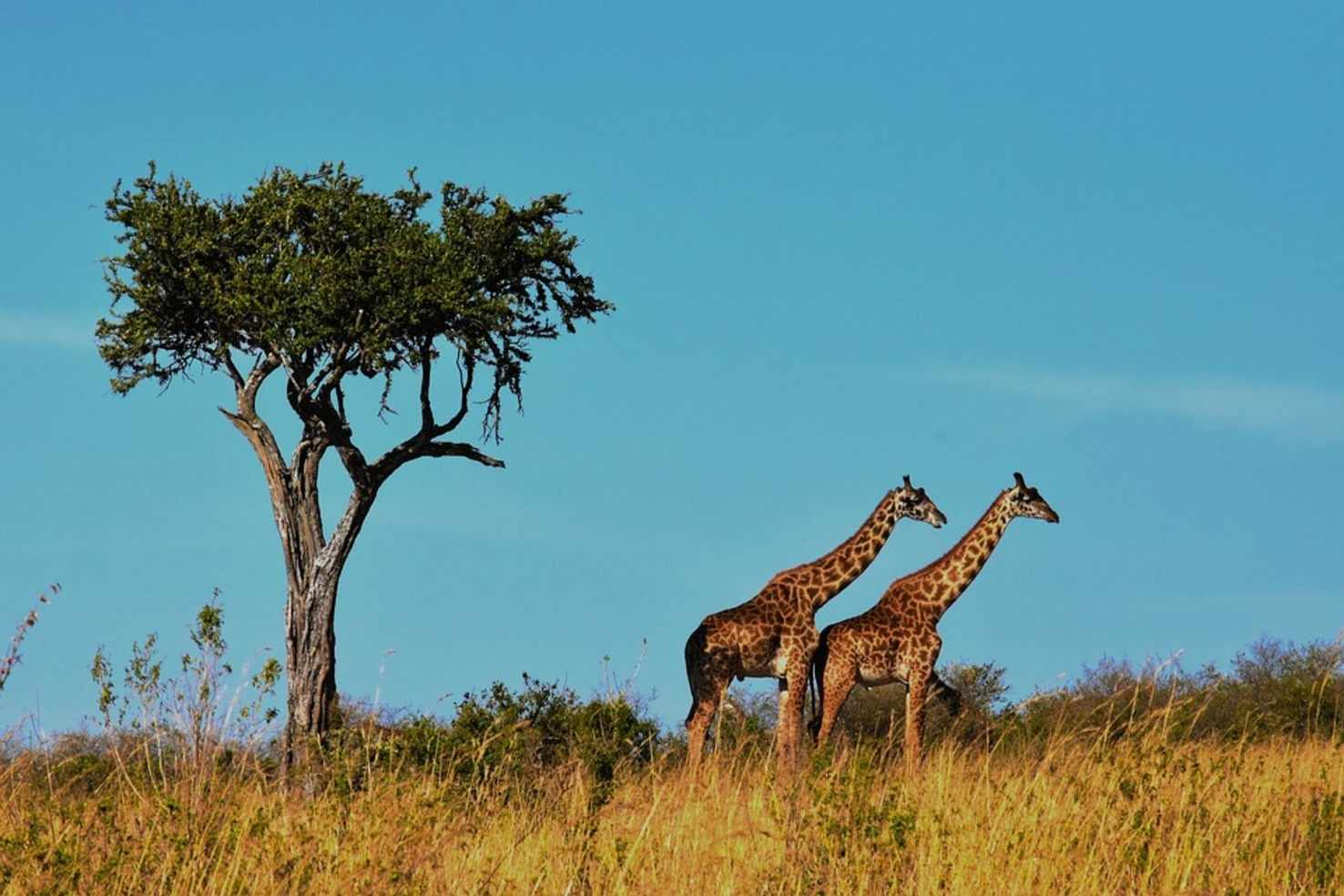 Kenya And Tanzania Combo Tour Package
