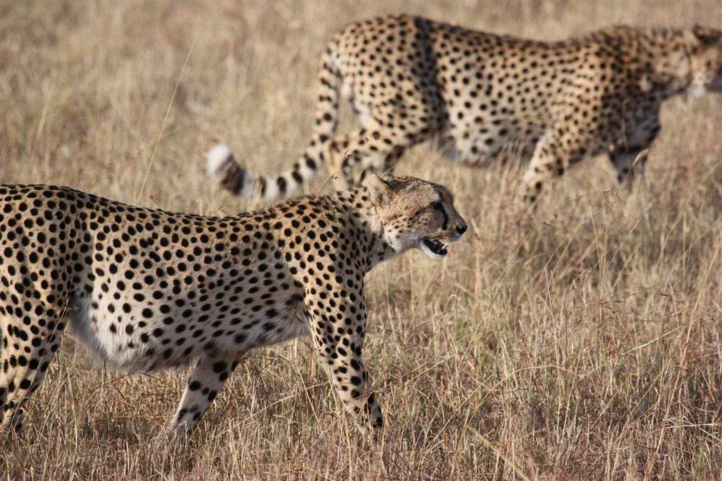 Tanzanian Discovery   Vacation Package To Tanzania