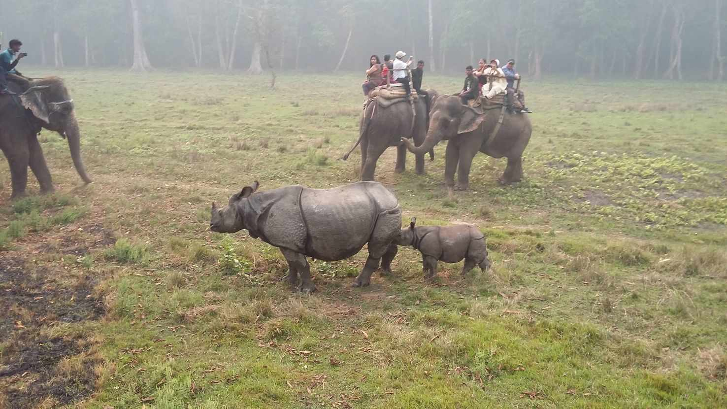 Large rhino s in chitwan national park