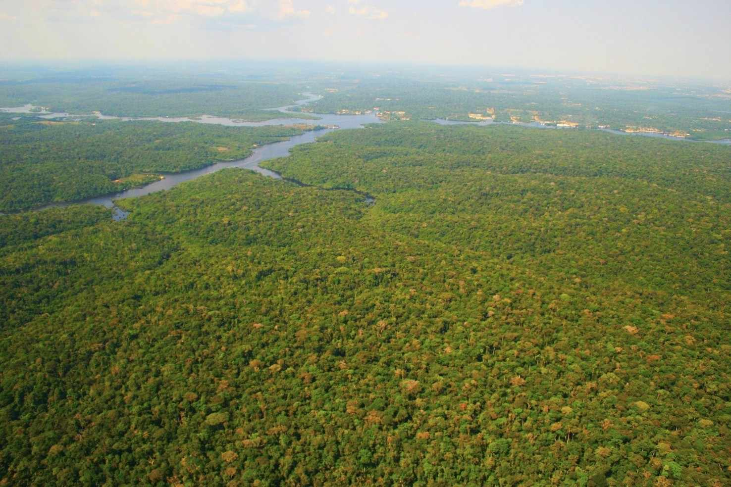 Large amazon rainforest manaus apa margem esquerda do rio negro   panoramio