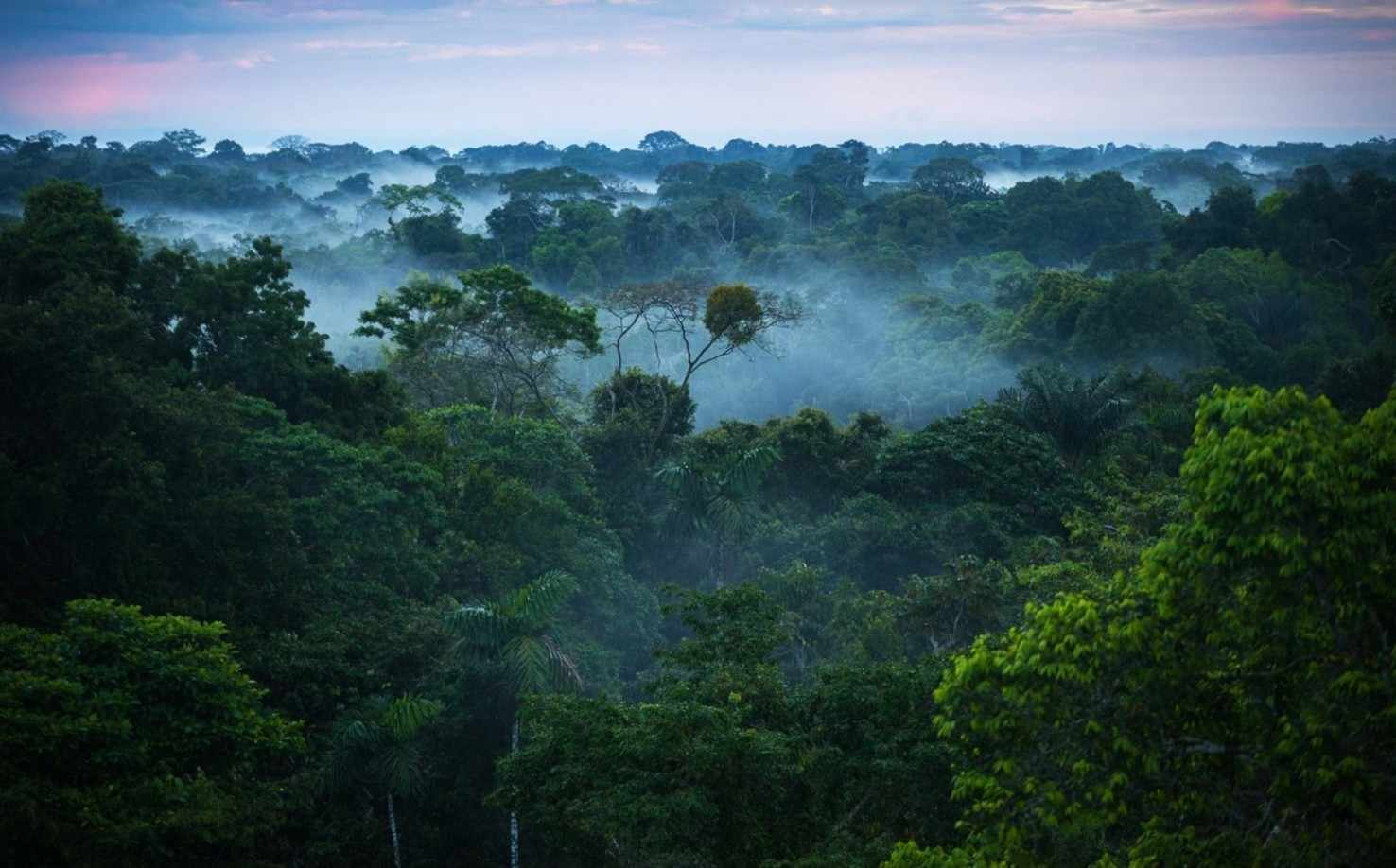 Amazonian Adventure   Brazil Tour Package