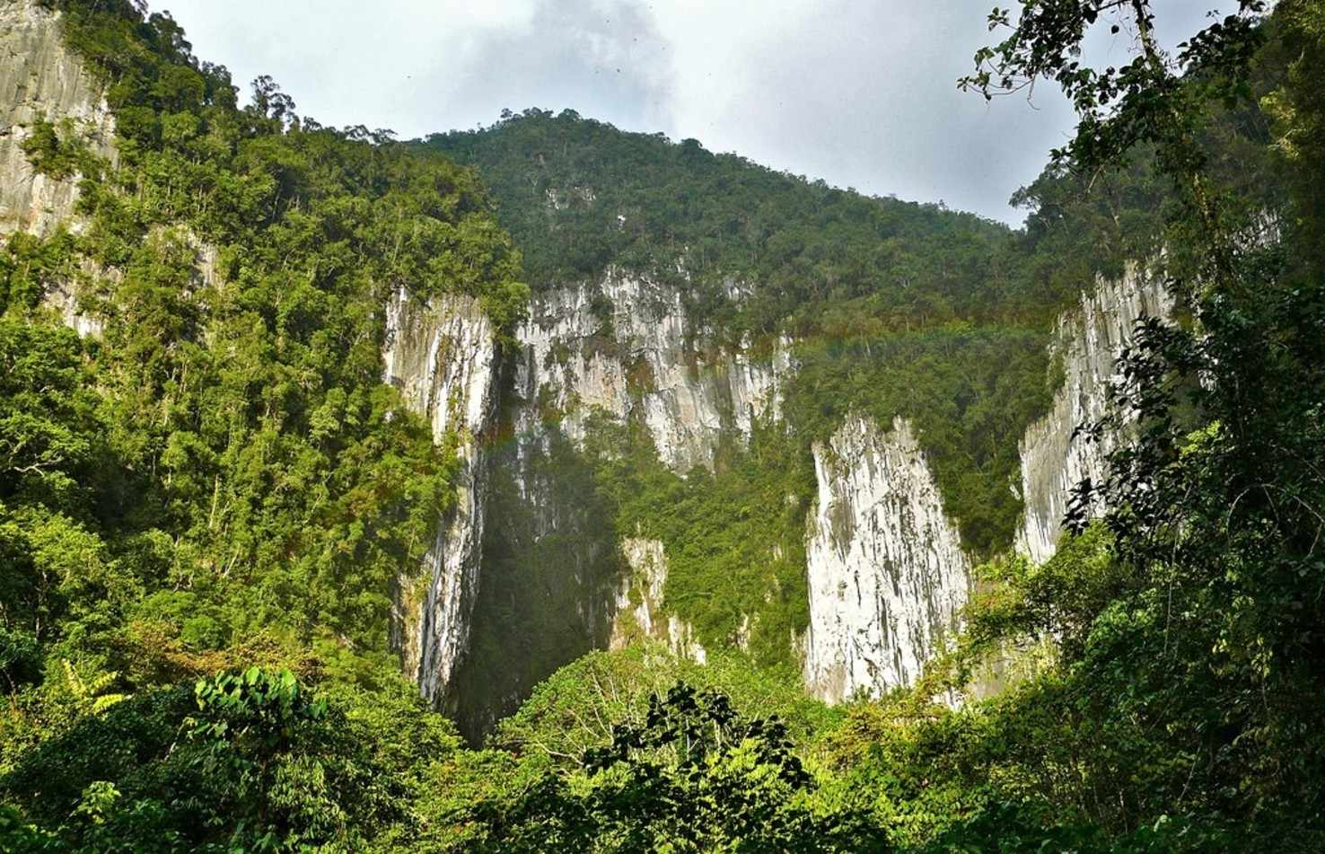 Large gunung mulu national park  8