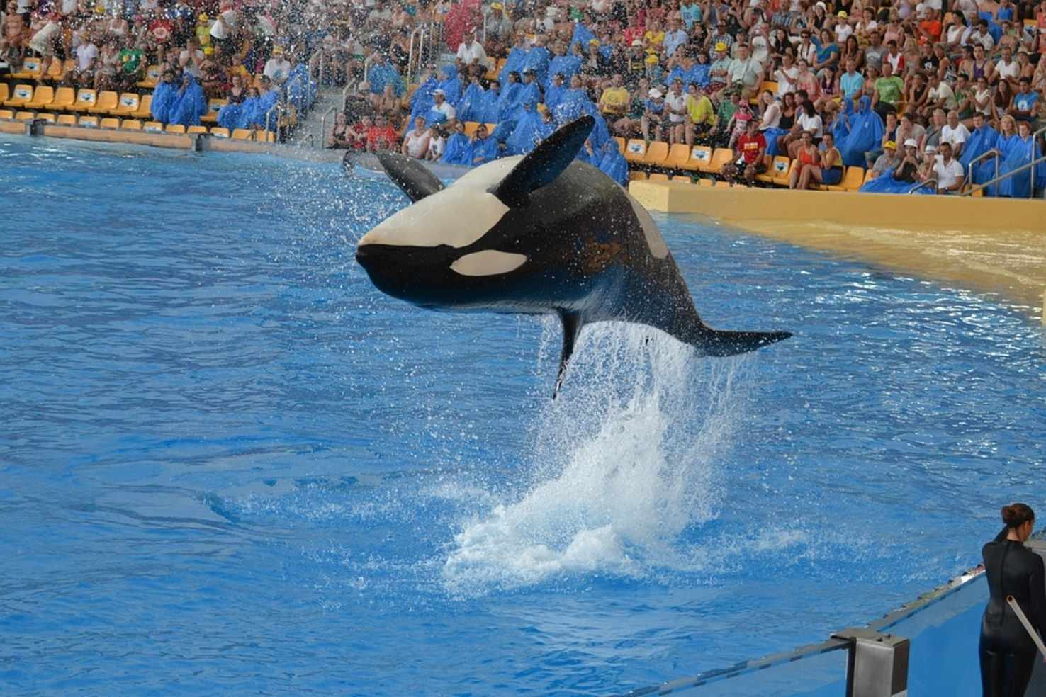 Large jump water park tenerife performance show orca